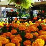Cempazuchitl or marigolds - the flower of death.